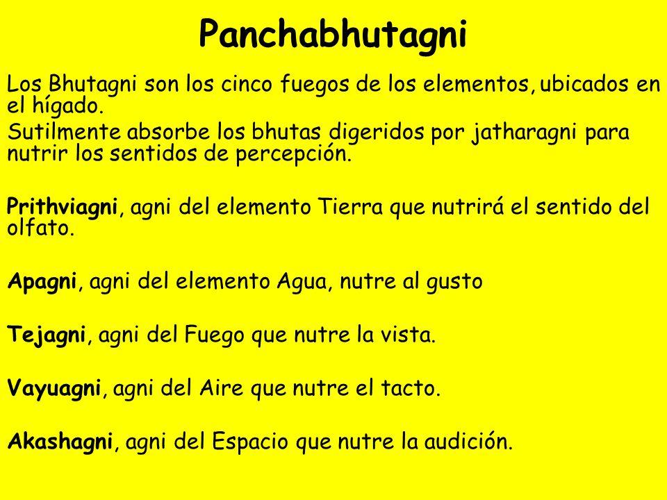 Panchabhutagni Los Bhutagni son los cinco fuegos de los elementos, ubicados en el hígado.