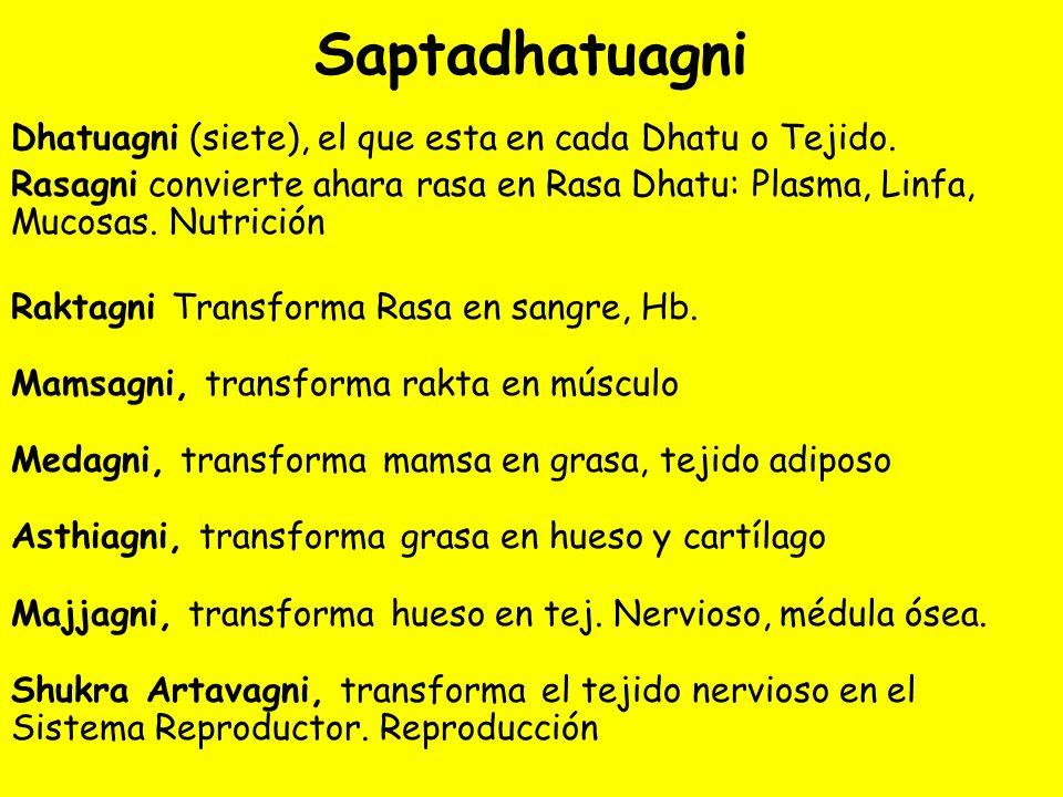 Saptadhatuagni Dhatuagni (siete), el que esta en cada Dhatu o Tejido.