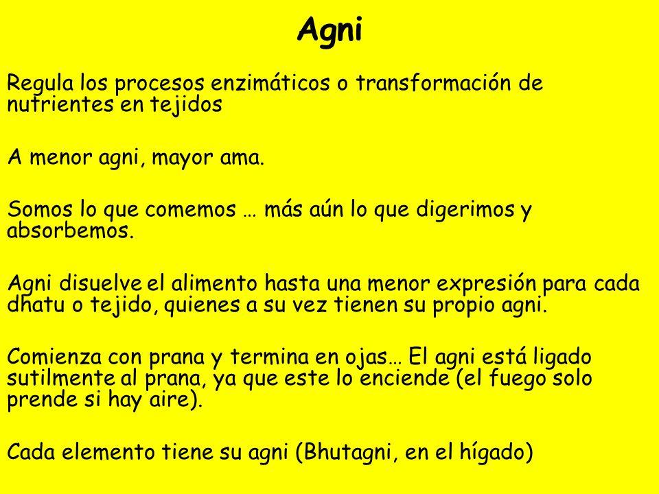 Agni Regula los procesos enzimáticos o transformación de nutrientes en tejidos. A menor agni, mayor ama.