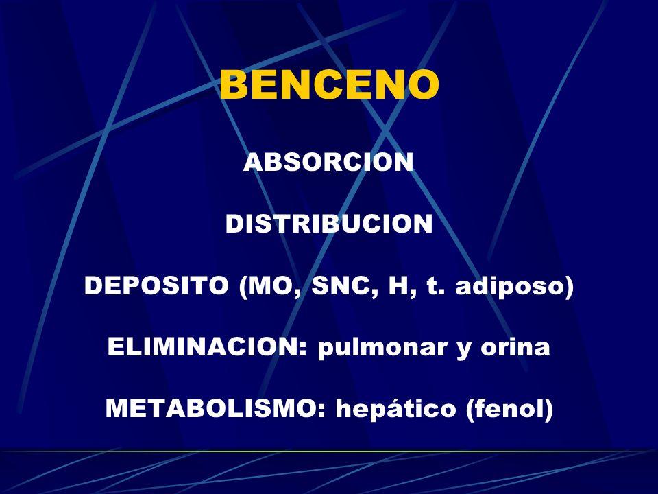 BENCENO ABSORCION DISTRIBUCION DEPOSITO (MO, SNC, H, t. adiposo)