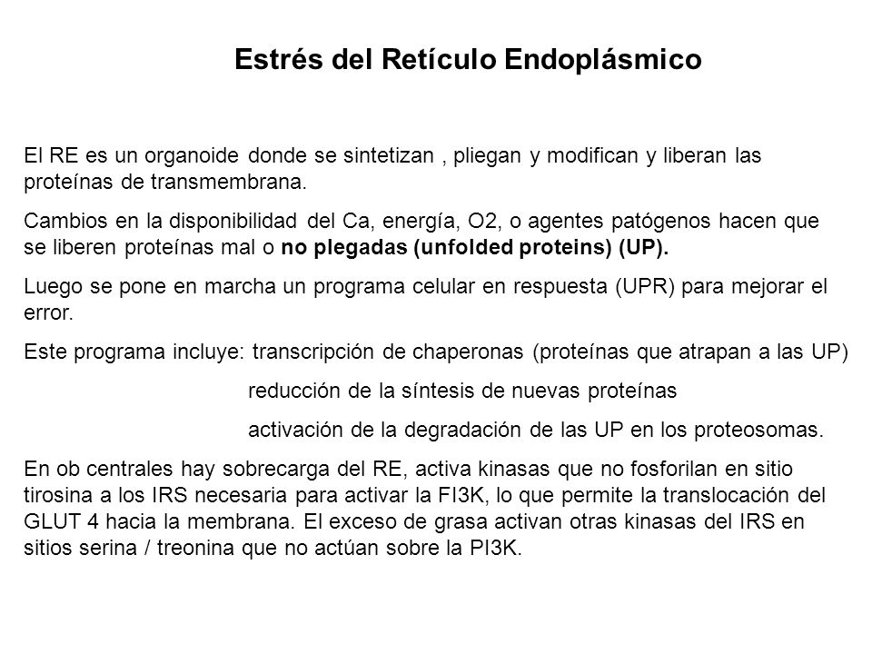 Estrés del Retículo Endoplásmico