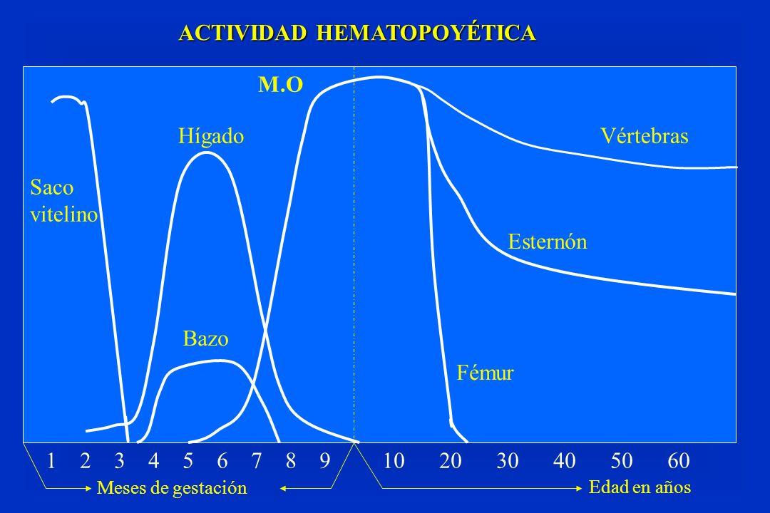 ACTIVIDAD HEMATOPOYÉTICA