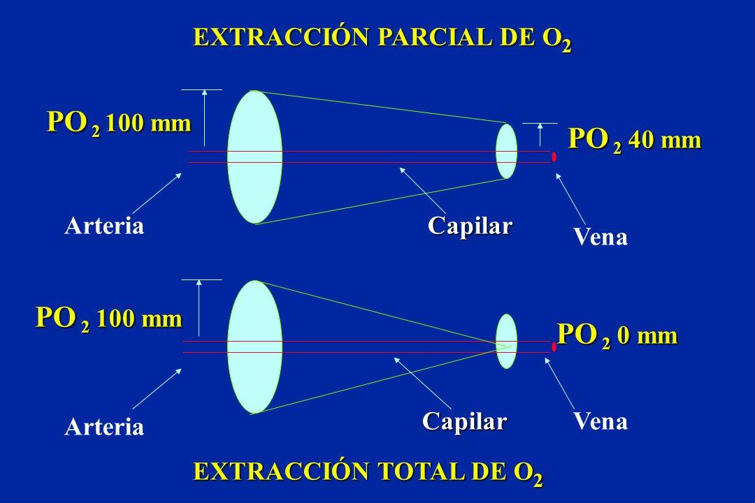 PO 2 100 mm PO 2 40 mm PO 2 100 mm PO 2 0 mm EXTRACCIÓN PARCIAL DE O2