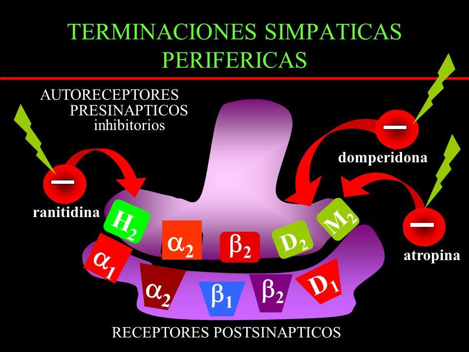 TERMINACIONES SIMPATICAS PERIFERICAS