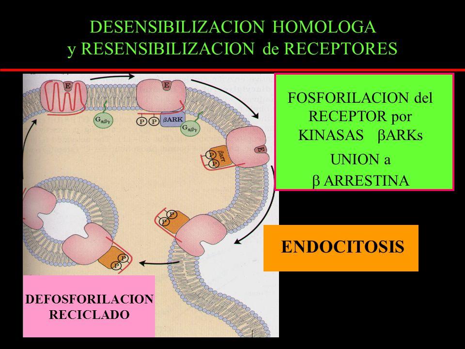 DESENSIBILIZACION HOMOLOGA y RESENSIBILIZACION de RECEPTORES