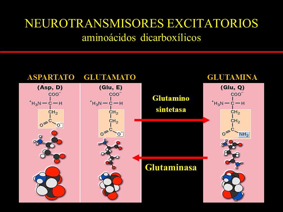NEUROTRANSMISORES EXCITATORIOS aminoácidos dicarboxílicos