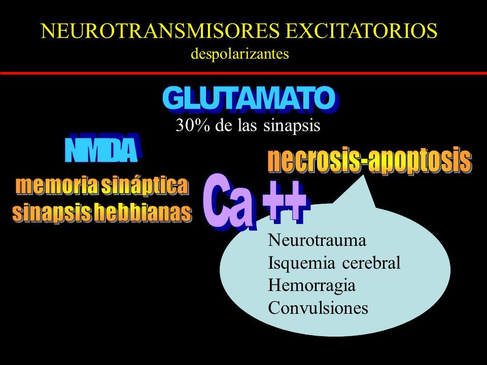 NEUROTRANSMISORES EXCITATORIOS despolarizantes