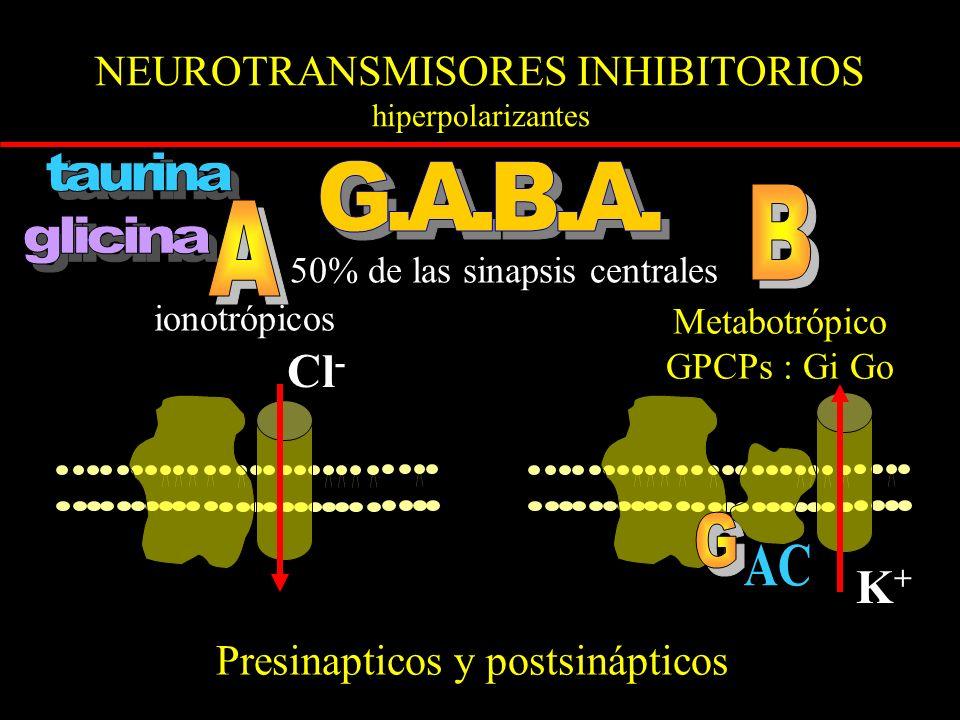 NEUROTRANSMISORES INHIBITORIOS hiperpolarizantes