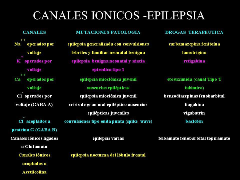 CANALES IONICOS -EPILEPSIA