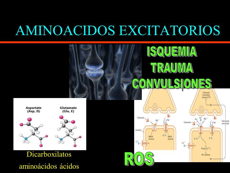 AMINOACIDOS EXCITATORIOS