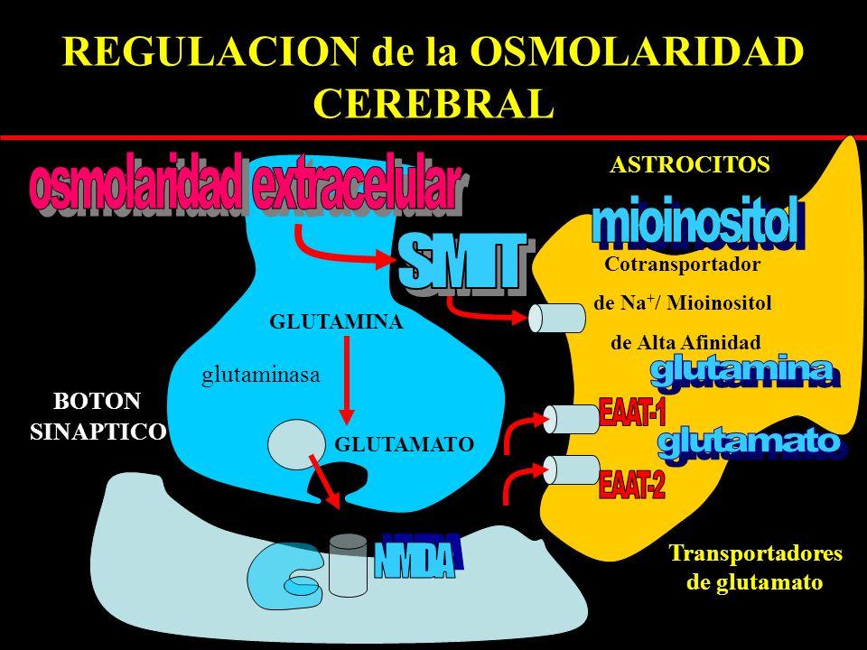 REGULACION de la OSMOLARIDAD CEREBRAL