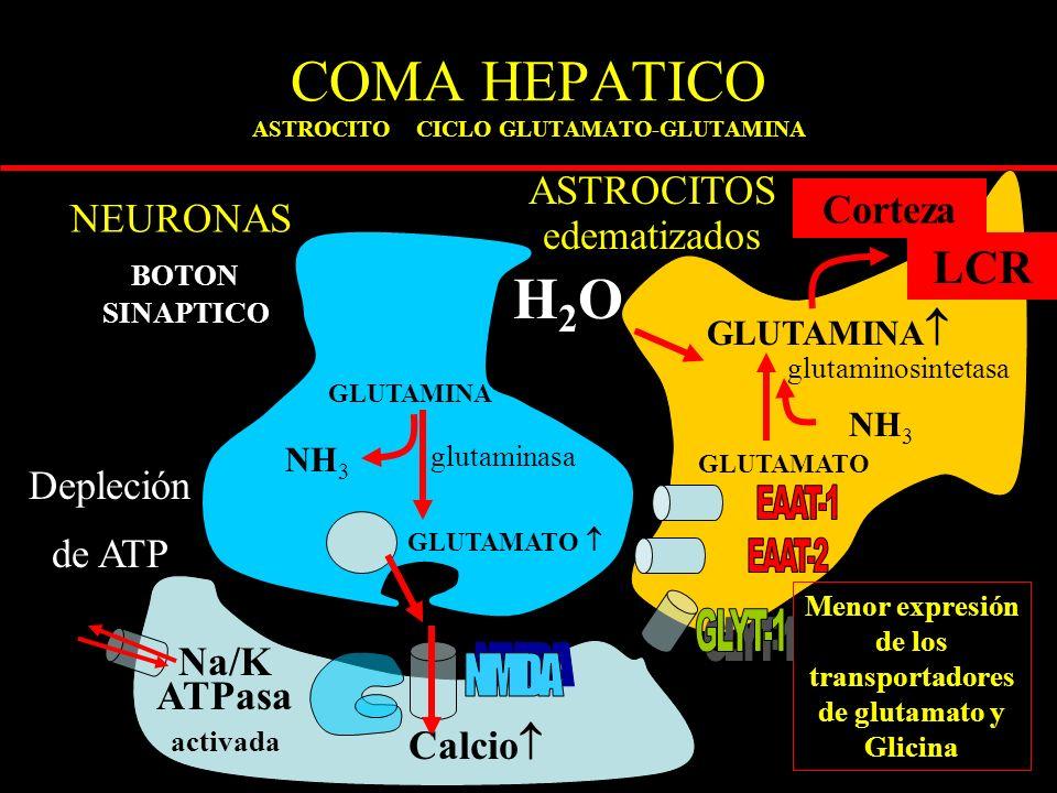 COMA HEPATICO ASTROCITO CICLO GLUTAMATO-GLUTAMINA