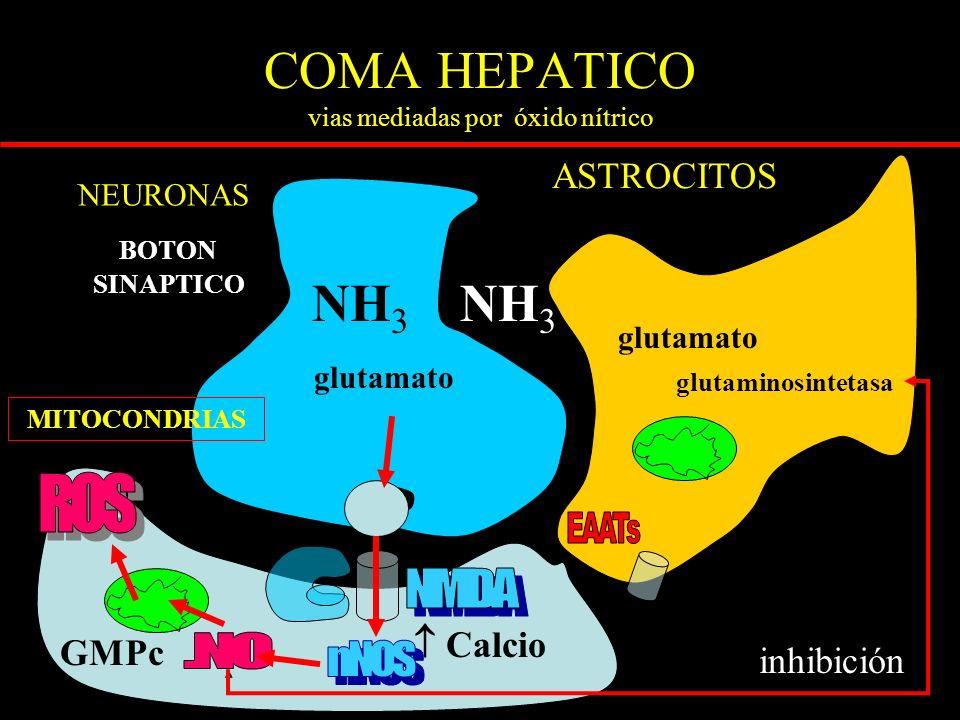 COMA HEPATICO vias mediadas por óxido nítrico