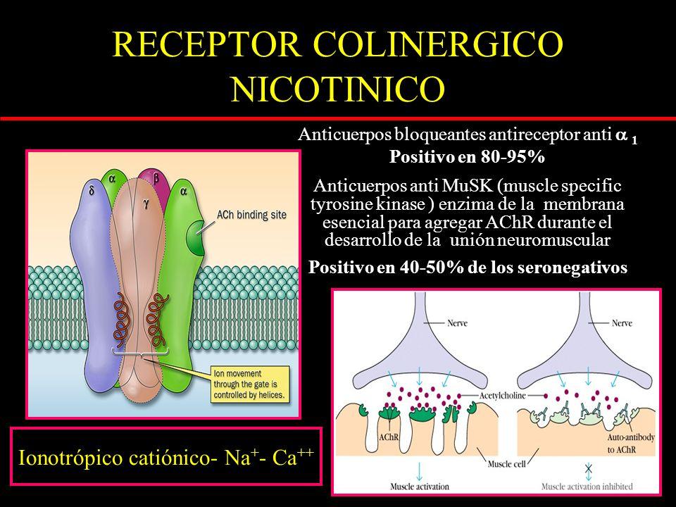 RECEPTOR COLINERGICO NICOTINICO