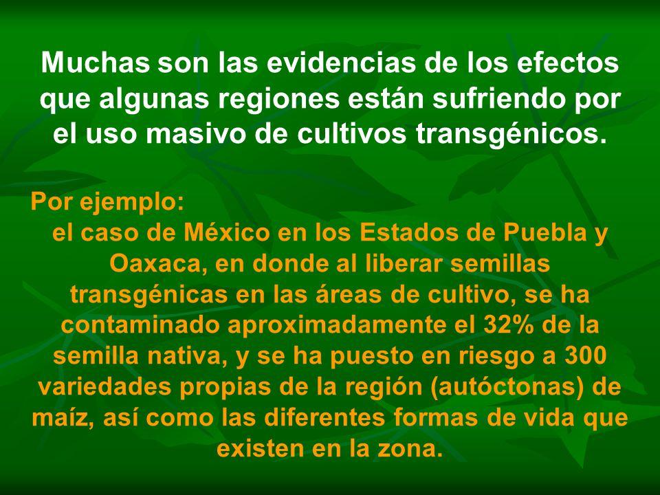 Muchas son las evidencias de los efectos que algunas regiones están sufriendo por el uso masivo de cultivos transgénicos.