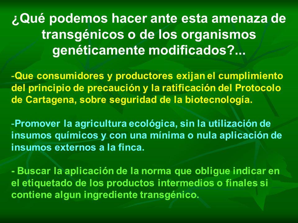 ¿Qué podemos hacer ante esta amenaza de transgénicos o de los organismos genéticamente modificados ...