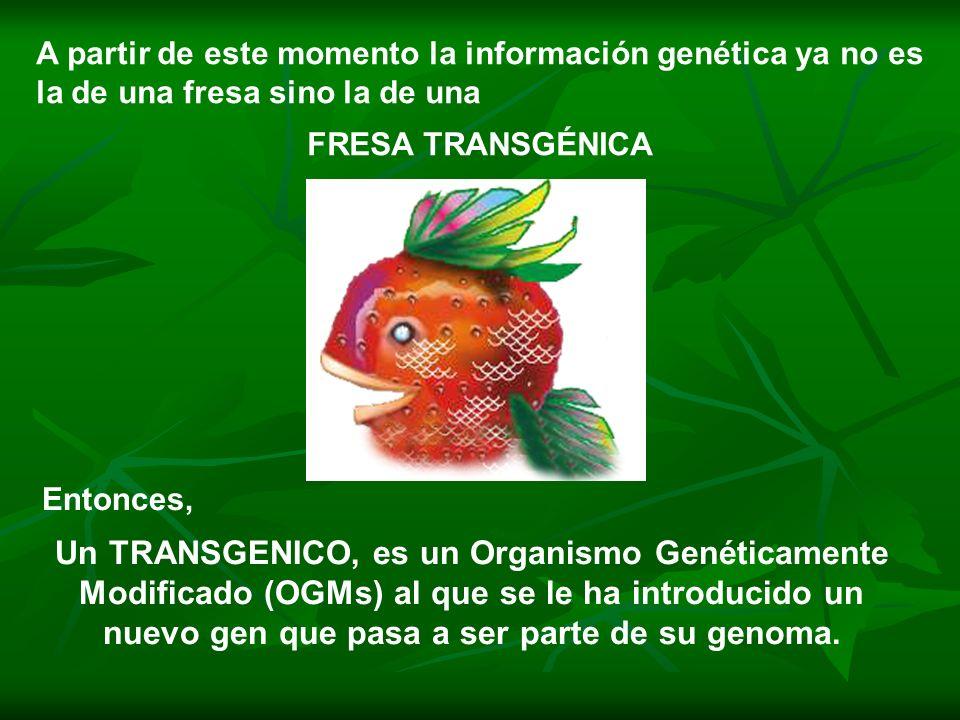 A partir de este momento la información genética ya no es la de una fresa sino la de una