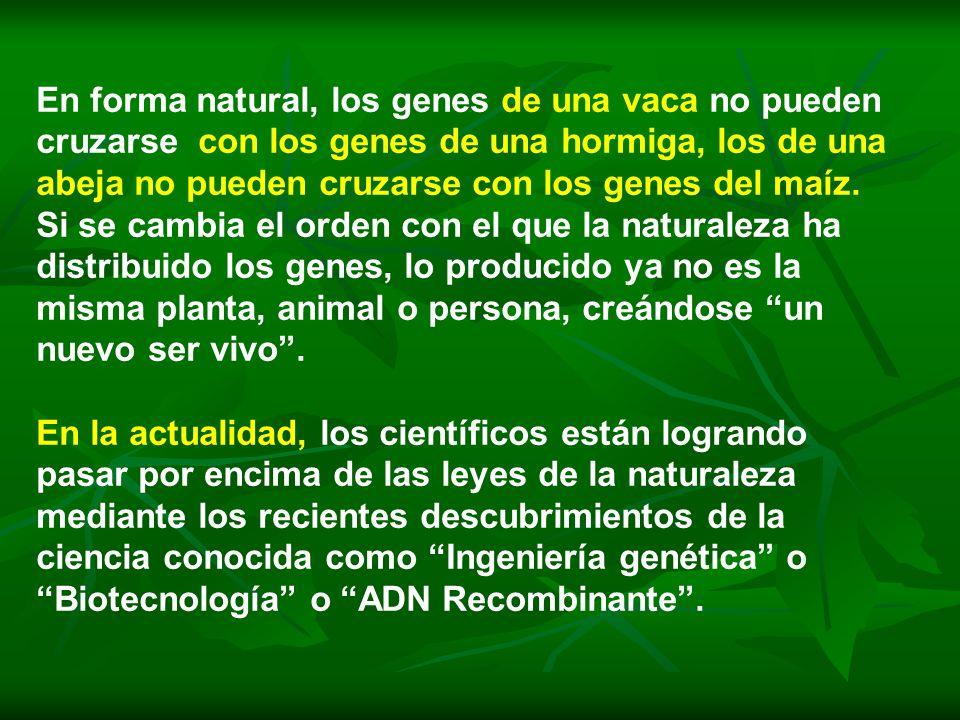 En forma natural, los genes de una vaca no pueden cruzarse con los genes de una hormiga, los de una abeja no pueden cruzarse con los genes del maíz.