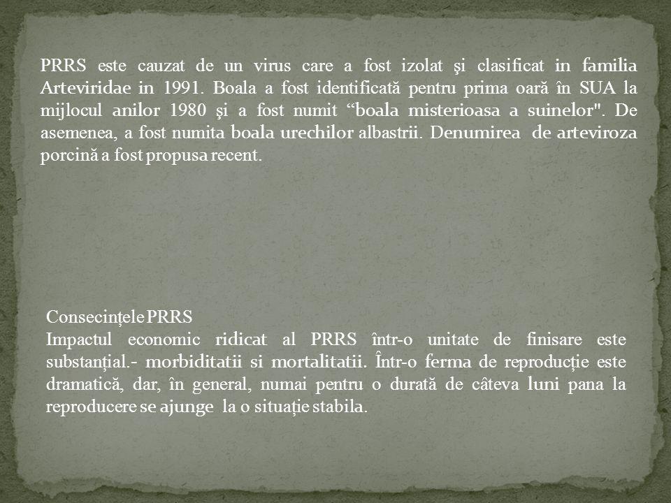 PRRS este cauzat de un virus care a fost izolat şi clasificat in familia Arteviridae in 1991. Boala a fost identificată pentru prima oară în SUA la mijlocul anilor 1980 şi a fost numit boala misterioasa a suinelor . De asemenea, a fost numita boala urechilor albastrii. Denumirea de arteviroza porcină a fost propusa recent.