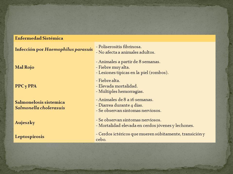 Enfermedad Sistémica Infección por Haemophilus parasuis. - Poliserositis fibrinosa. - No afecta a animales adultos.