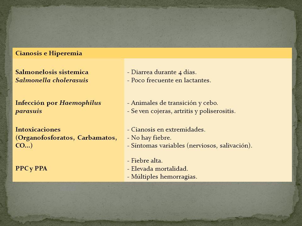 Cianosis e Hiperemia Salmonelosis sistemica Salmonella cholerasuis. - Diarrea durante 4 días. - Poco frecuente en lactantes.