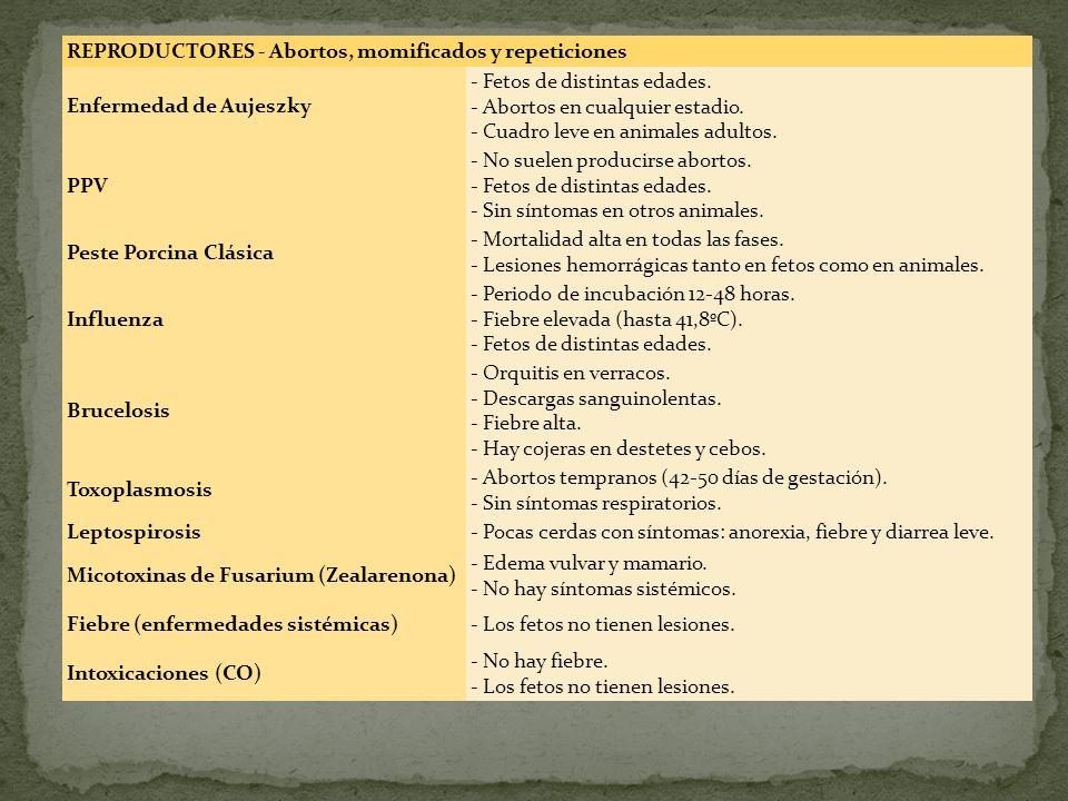 REPRODUCTORES - Abortos, momificados y repeticiones