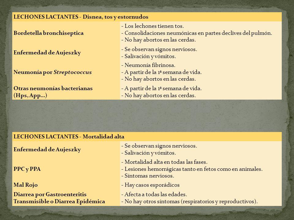 LECHONES LACTANTES - Disnea, tos y estornudos