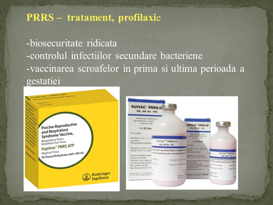 PRRS – tratament, profilaxie