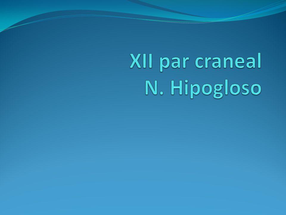 XII par craneal N. Hipogloso
