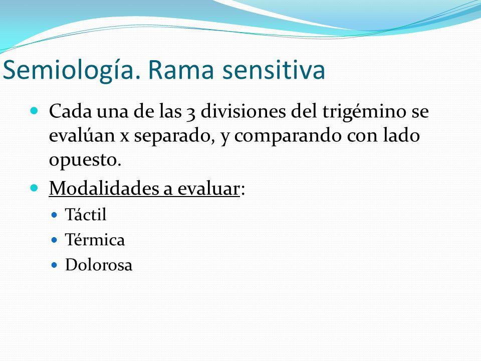 Semiología. Rama sensitiva