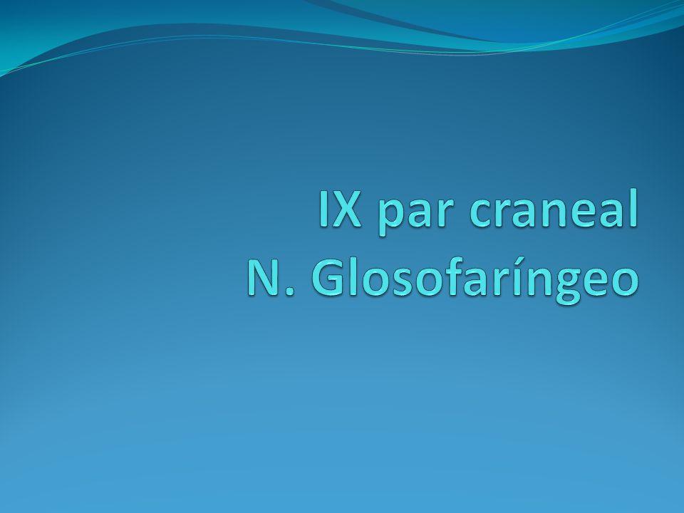 IX par craneal N. Glosofaríngeo