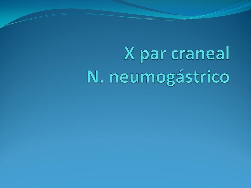 X par craneal N. neumogástrico