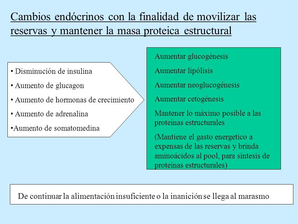 Cambios endócrinos con la finalidad de movilizar las reservas y mantener la masa proteica estructural