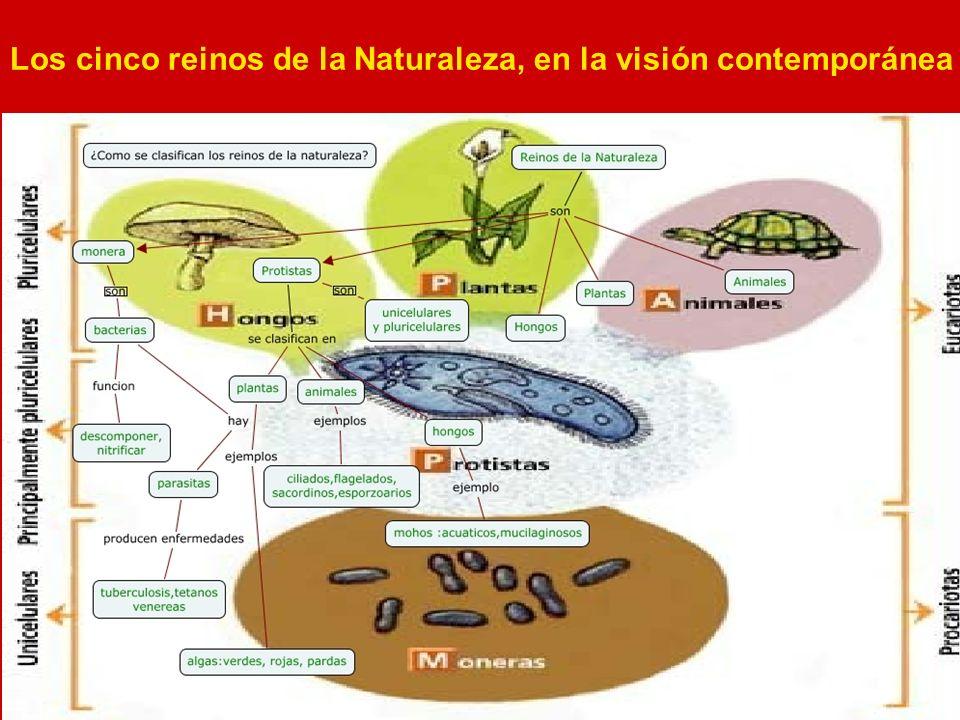 Los cinco reinos de la Naturaleza, en la visión contemporánea