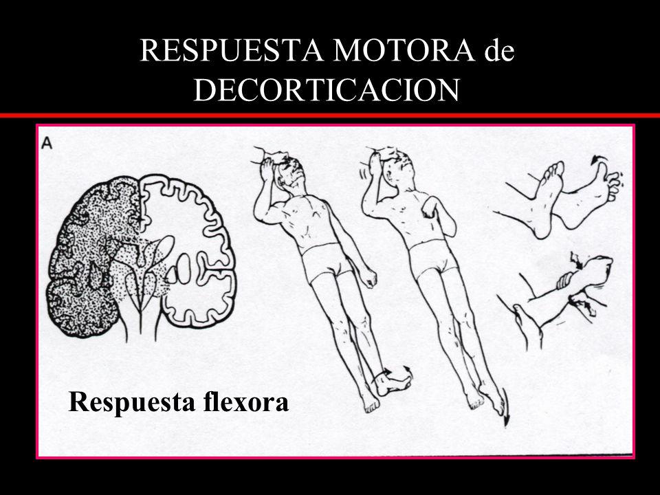 RESPUESTA MOTORA de DECORTICACION