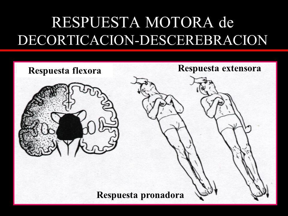 RESPUESTA MOTORA de DECORTICACION-DESCEREBRACION