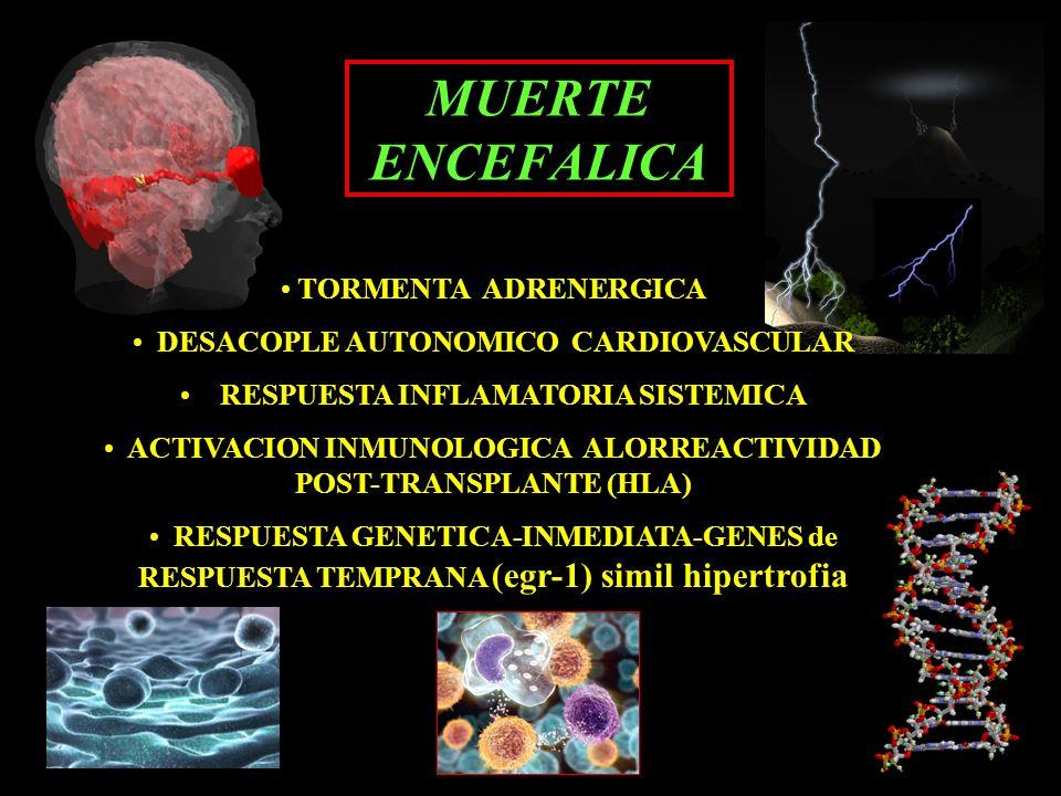 MUERTE ENCEFALICA TORMENTA ADRENERGICA