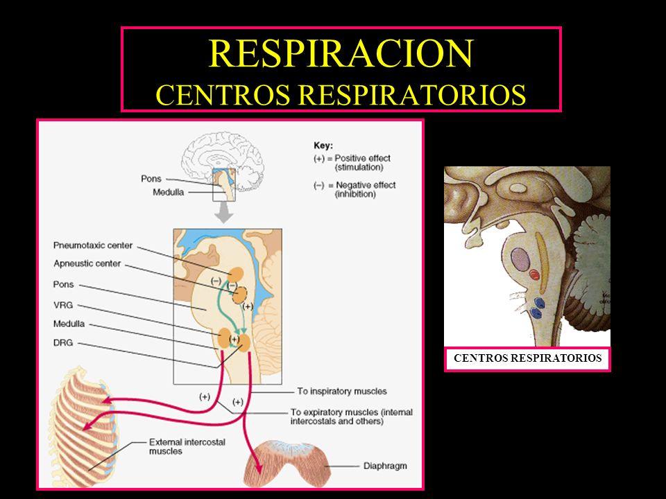 RESPIRACION CENTROS RESPIRATORIOS