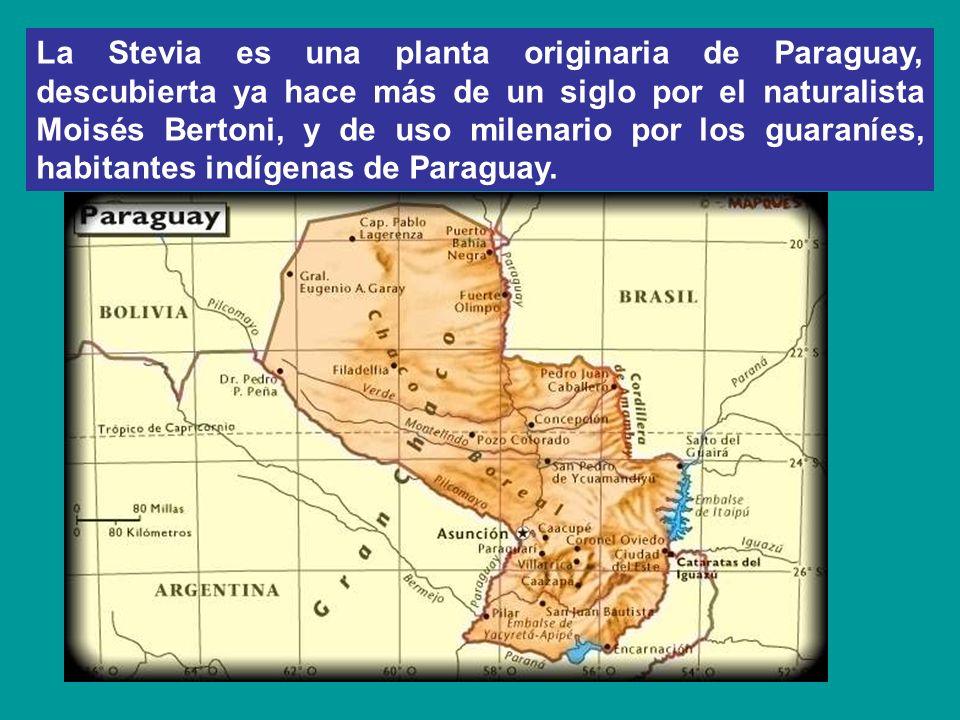 La Stevia es una planta originaria de Paraguay, descubierta ya hace más de un siglo por el naturalista Moisés Bertoni, y de uso milenario por los guaraníes, habitantes indígenas de Paraguay.