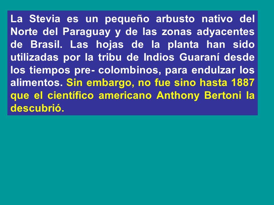 La Stevia es un pequeño arbusto nativo del Norte del Paraguay y de las zonas adyacentes de Brasil.