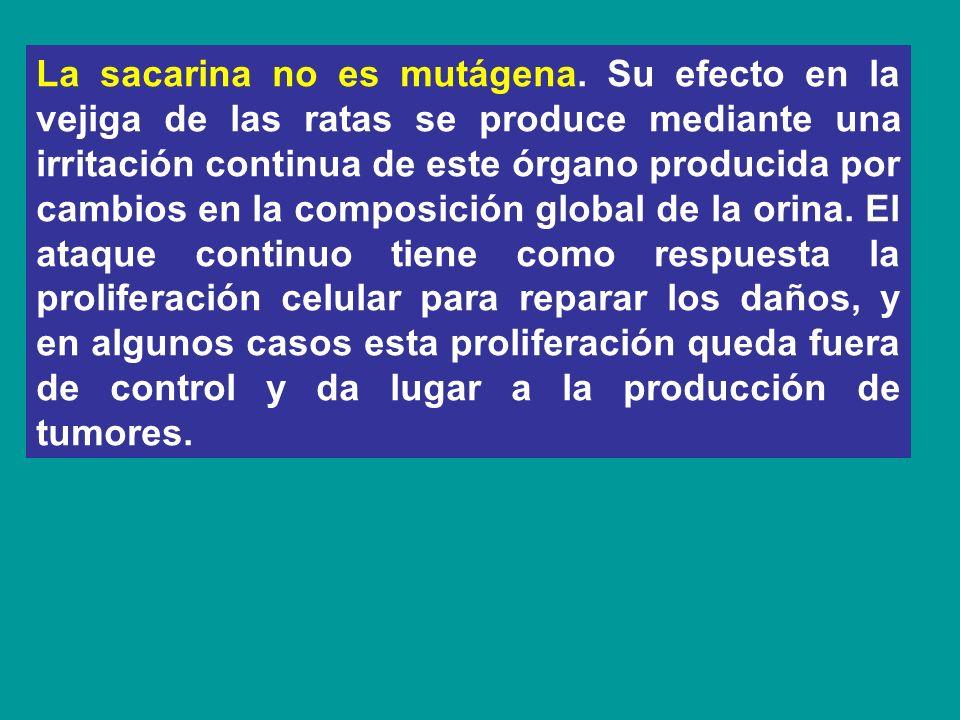 La sacarina no es mutágena