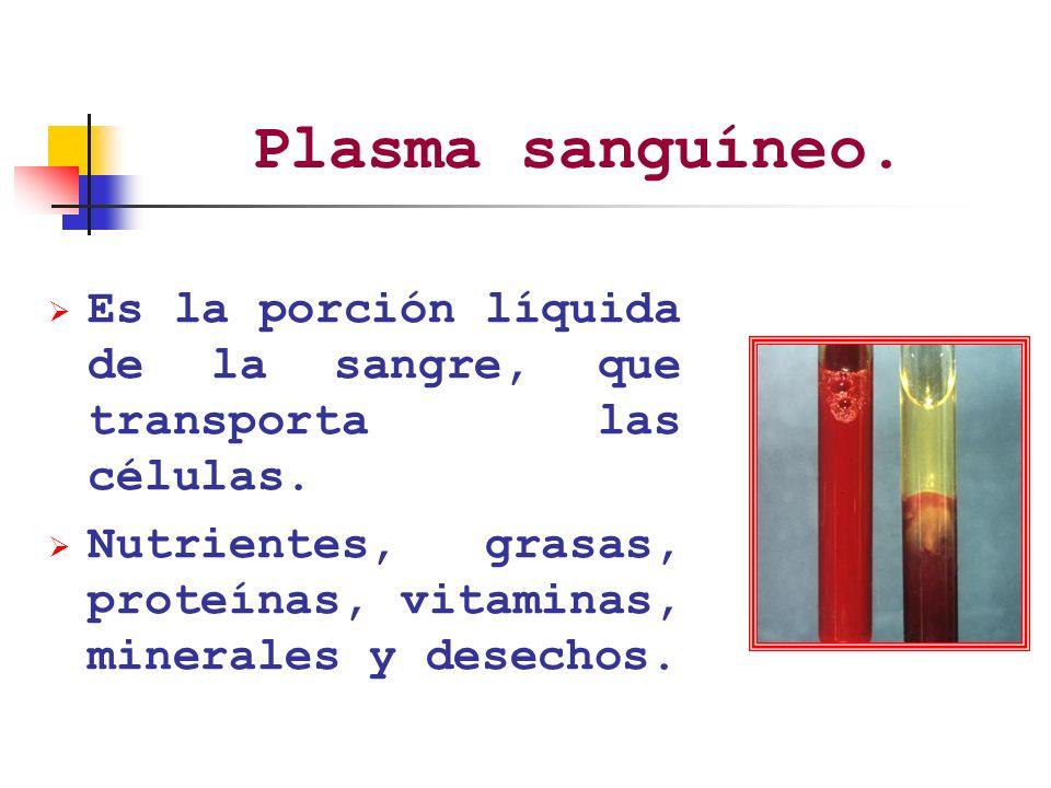 Plasma sanguíneo. Es la porción líquida de la sangre, que transporta las células.