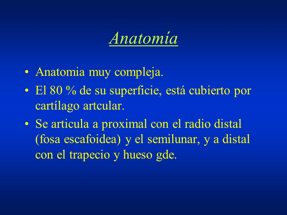 Anatomía Anatomia muy compleja.