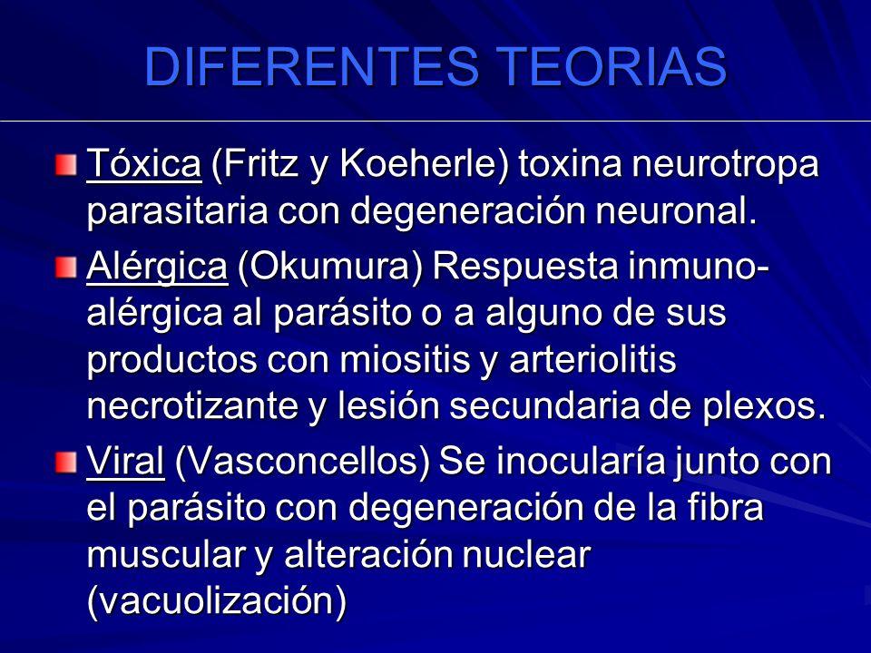 DIFERENTES TEORIAS Tóxica (Fritz y Koeherle) toxina neurotropa parasitaria con degeneración neuronal.