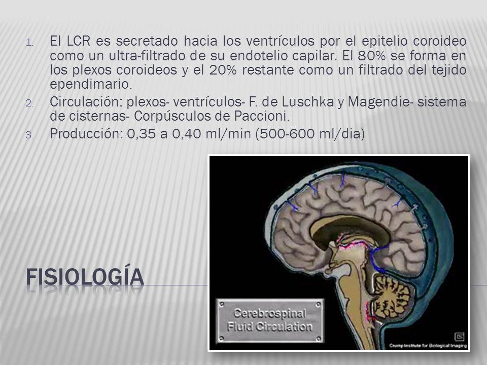 El LCR es secretado hacia los ventrículos por el epitelio coroideo como un ultra-filtrado de su endotelio capilar. El 80% se forma en los plexos coroideos y el 20% restante como un filtrado del tejido ependimario.