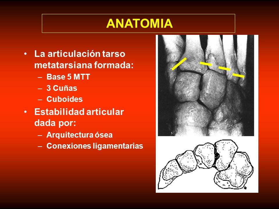 ANATOMIA La articulación tarso metatarsiana formada: