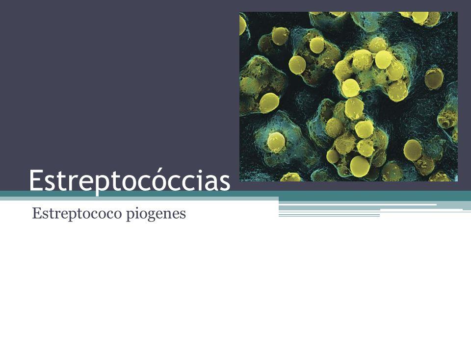 Estreptococo piogenes