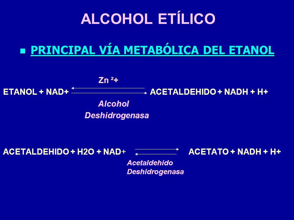 PRINCIPAL VÍA METABÓLICA DEL ETANOL