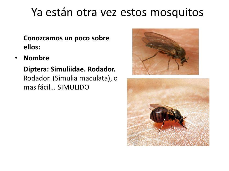 Ya están otra vez estos mosquitos
