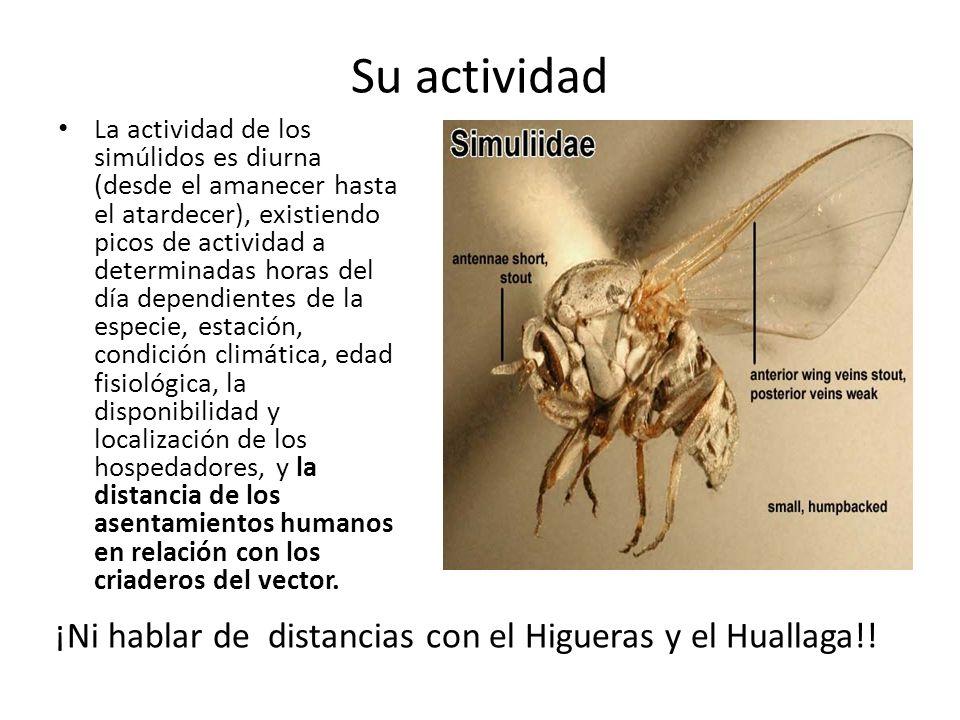 Su actividad ¡Ni hablar de distancias con el Higueras y el Huallaga!!